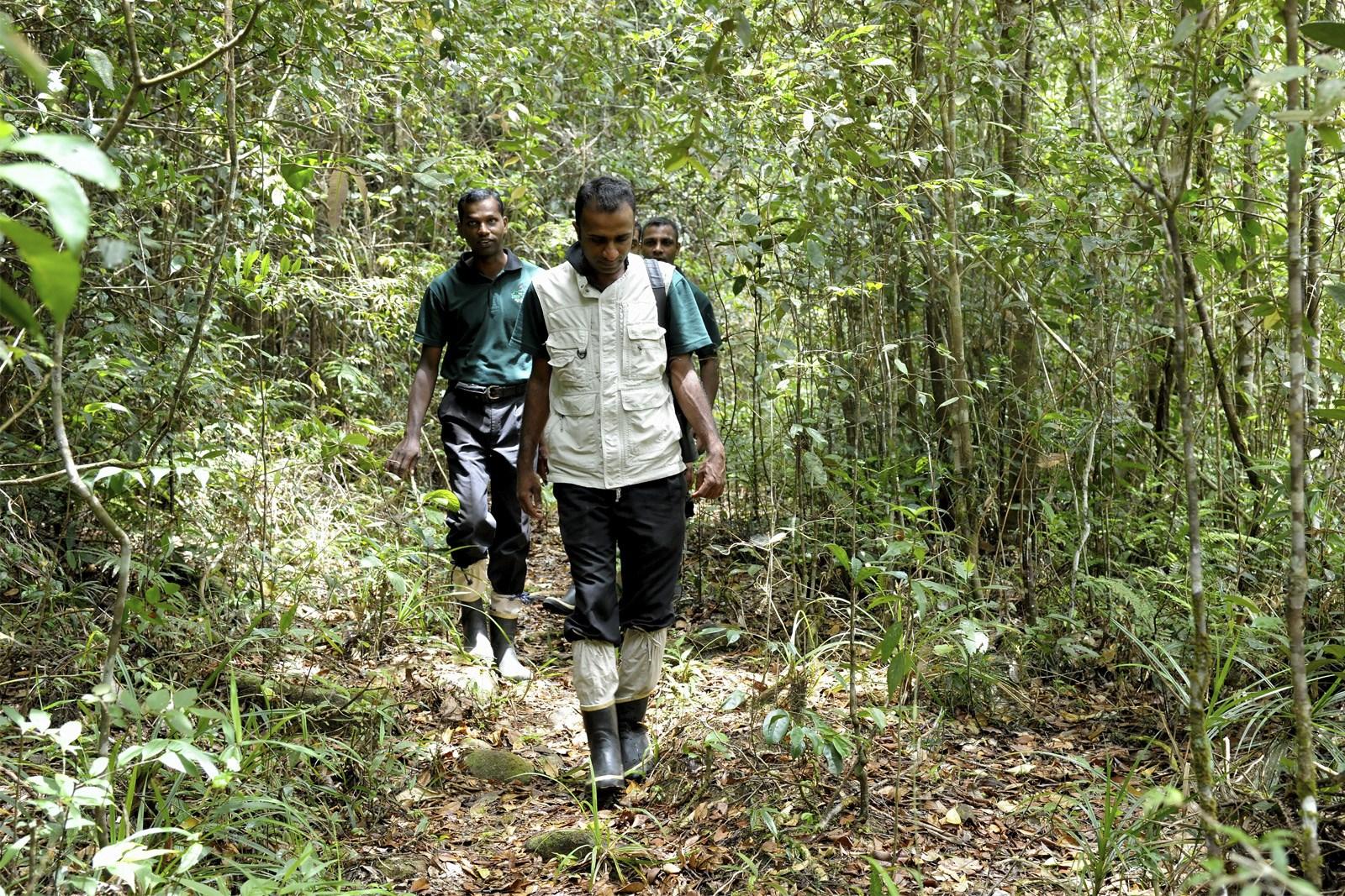 Trekking in Sinharaja Forest Sri Lanka
