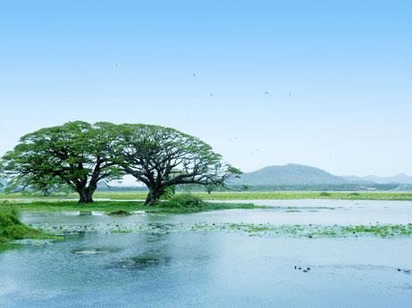 Habarana Sri Lanka