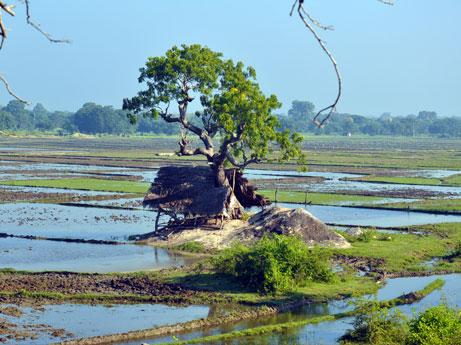 Rathnapura Sri Lanka